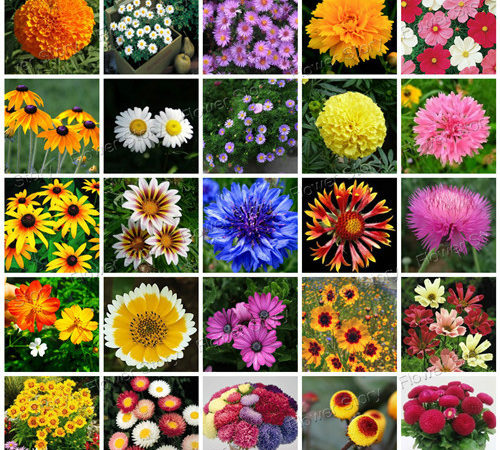 Can You Name The Most Popular Flowers Without Looking Them Up?